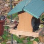 Finch3